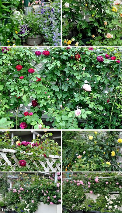 お庭の様子