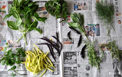 お庭のお野菜とハーブ