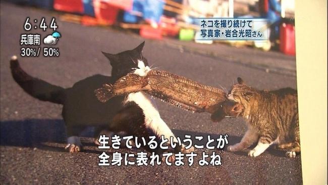 岩合光昭 猫