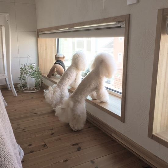お久しぶりです☆ ココモコ専用の窓!使っています