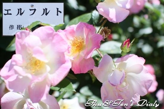 004aIMG_3437.jpg