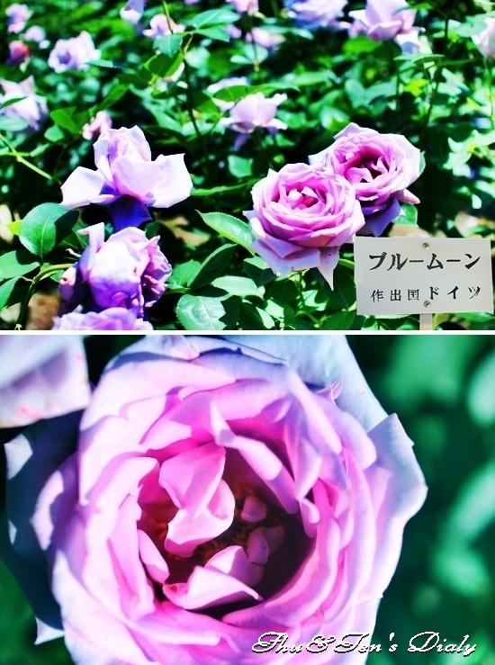 011aIMG_3423.jpg