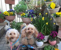 春の散歩出勤3