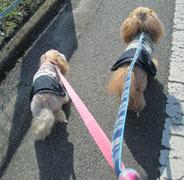 春の散歩出勤6