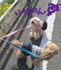 春の散歩出勤7