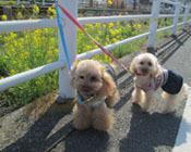 春の散歩出勤9