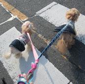 春の散歩出勤12