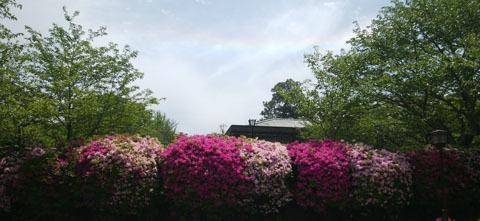 ツヅシ 空には虹