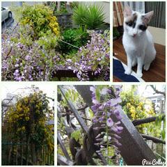 2017 春のお花b コラ