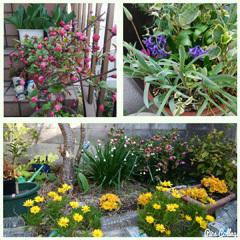4月のお花a コラ