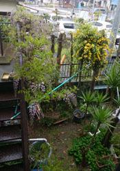417 猫の庭