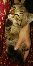 子猫2日目(20日)1