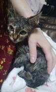 子猫初シャンプー12