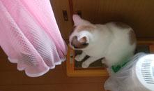 521 子猫とわんこ初対面2