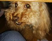 テーブル下から 可愛い顔
