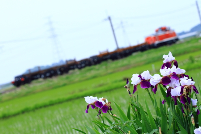鉄道写真1791