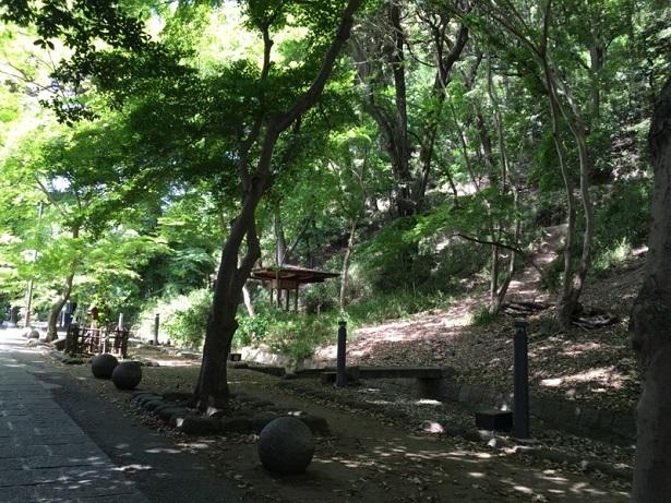 201705京都スマホ (22)