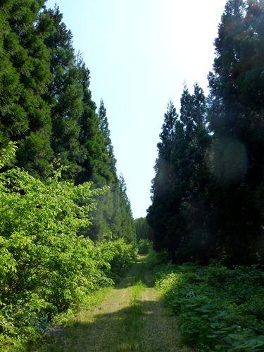 nishiyamatouge_h3.jpg
