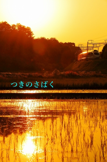 IMG_8541c8300_1.jpg