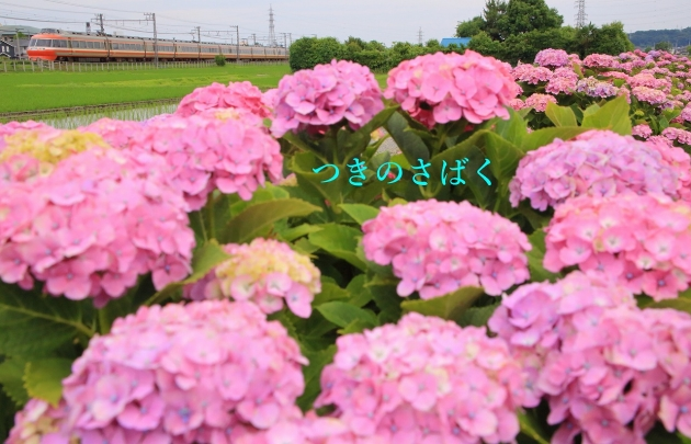 IMG_9246f5800stanp_1.jpg