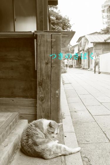 IMG_9347mono_1.jpg
