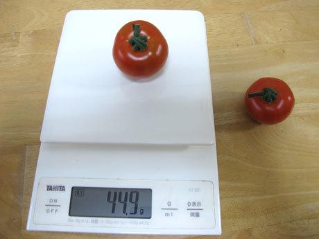 収穫したMr.浅野のけっさく 体重測定