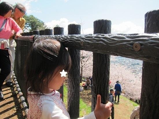 忠霊塔裏より桜を見下ろす