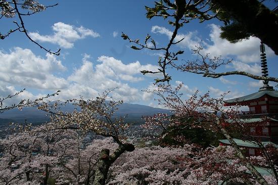 忠霊塔と桜と富士山