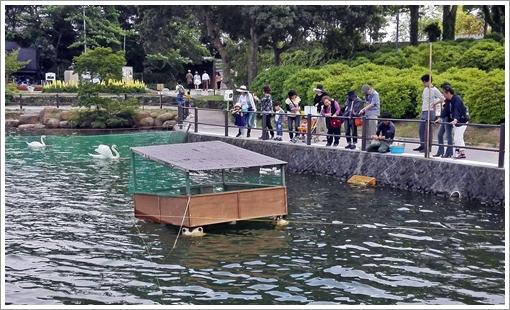 2017tokiwapark_swan06.jpg