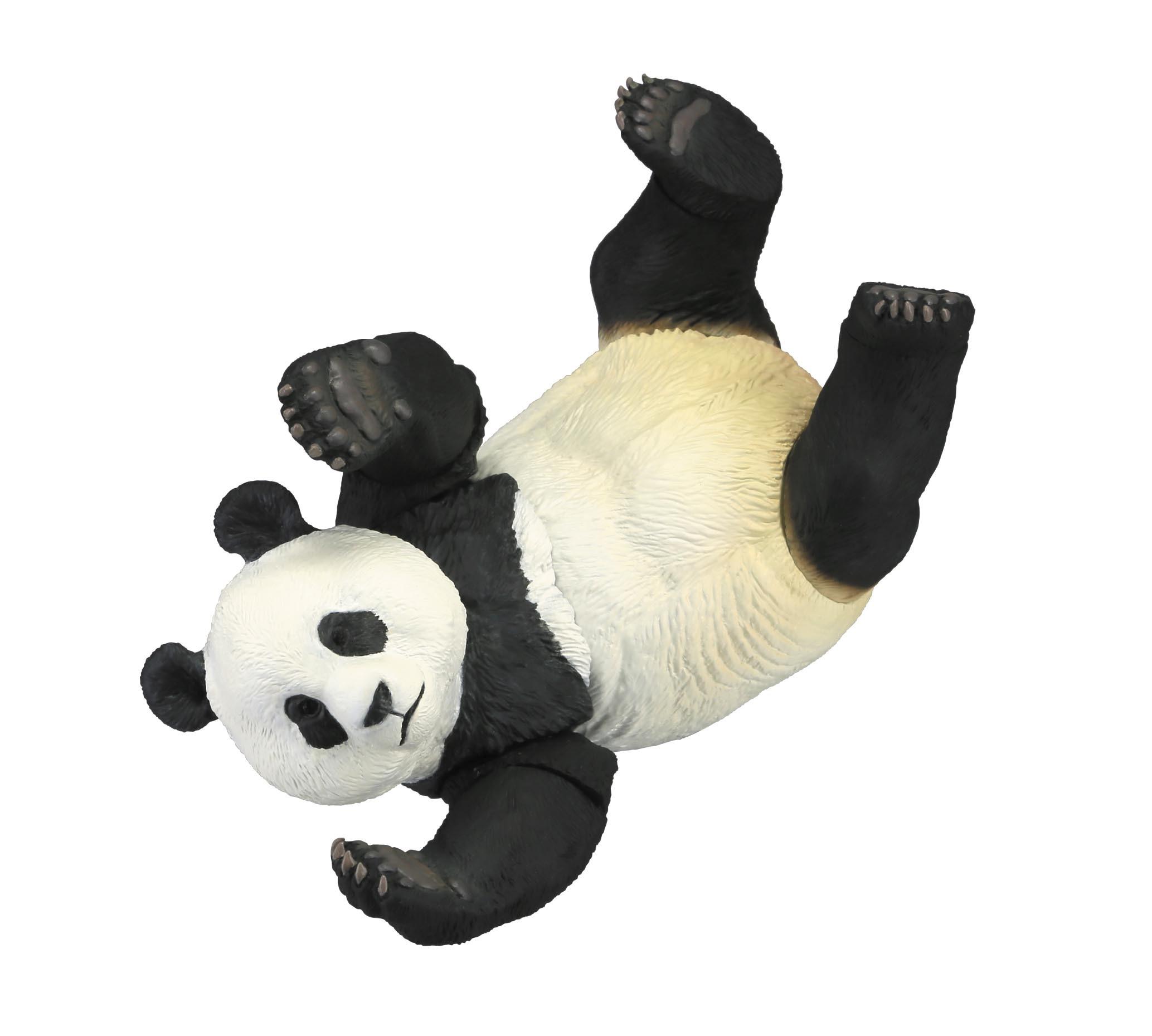 panda_blog3.jpg