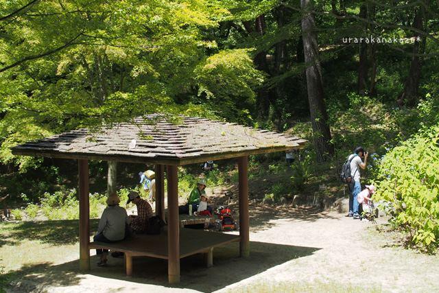 神戸市立森林植物園 アジサイ区