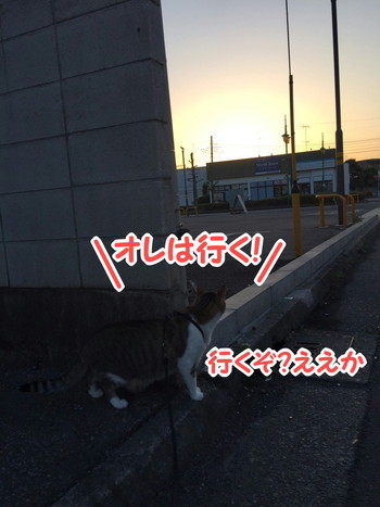 S_6053055553810.jpg