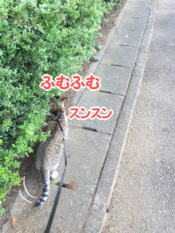 S_6207759279359.jpg