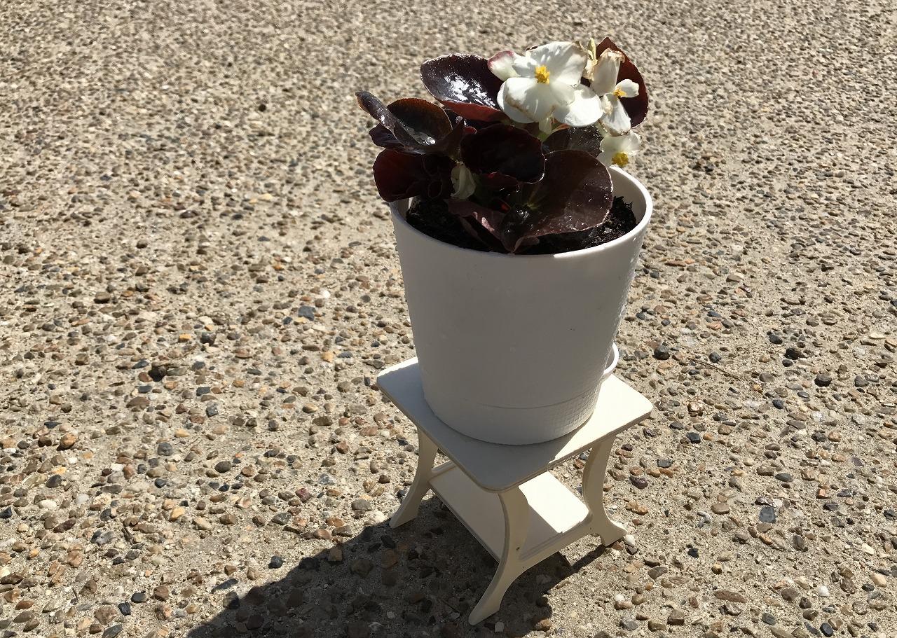 20170502-Begonia_Replant-I04.jpg