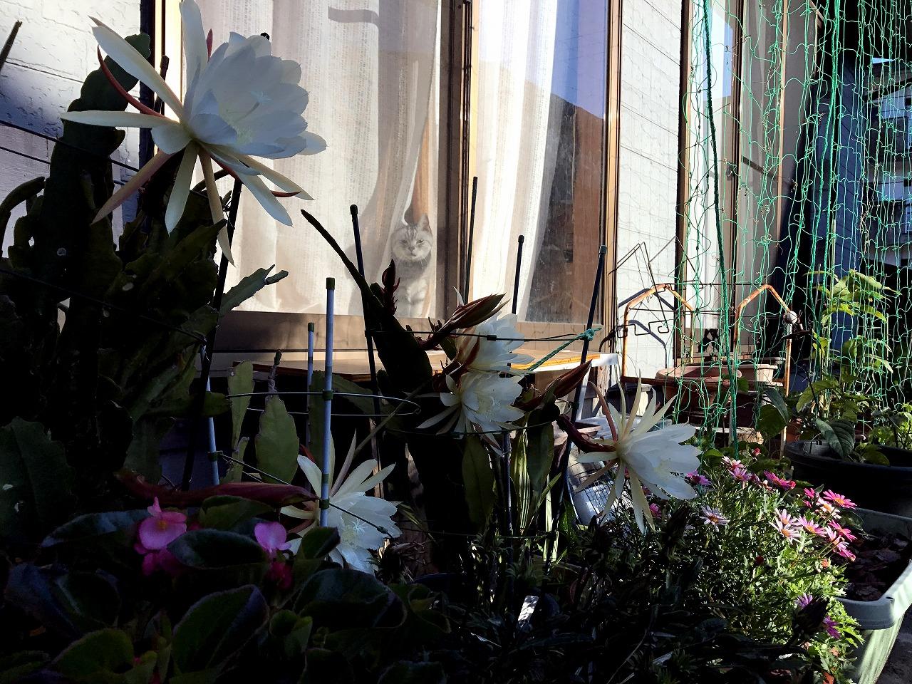 20170605-Epiphyllum-I04.jpg