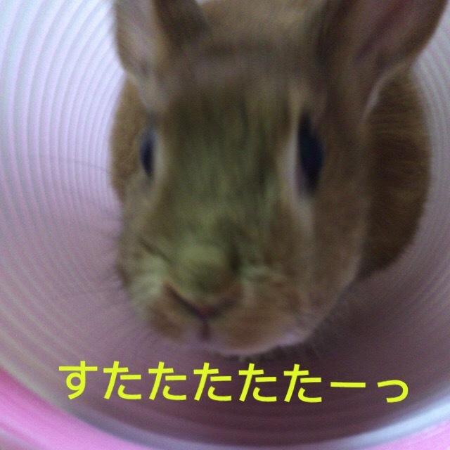 image4 (13)