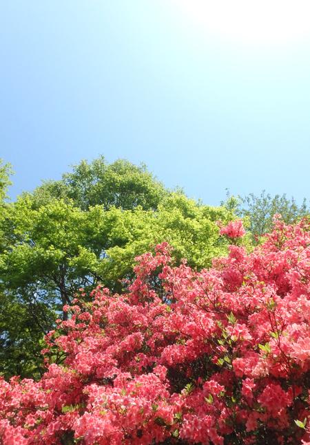 29_5_2 矢板市の長峰公園 3