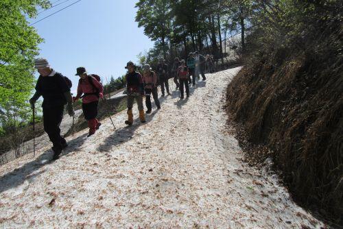 雪の林道歩き