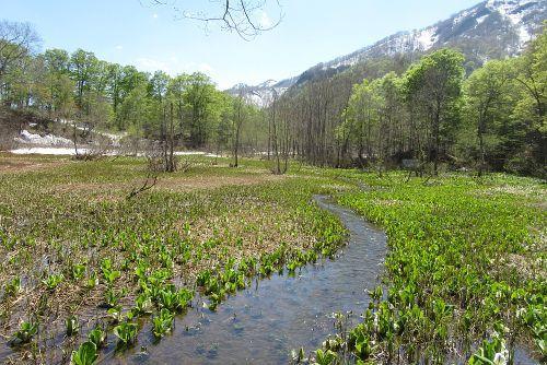 湿地と小川