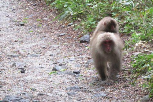 サルとすれ違い