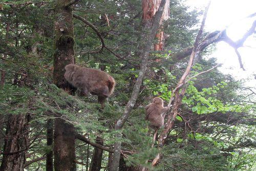 木に登ったサル