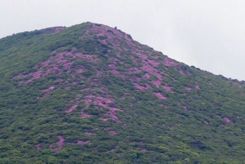 平治岳の斜面