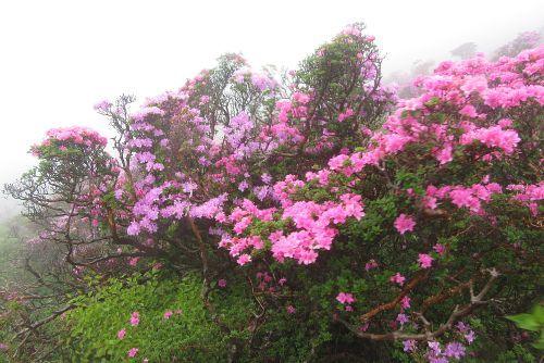 色味の違う花