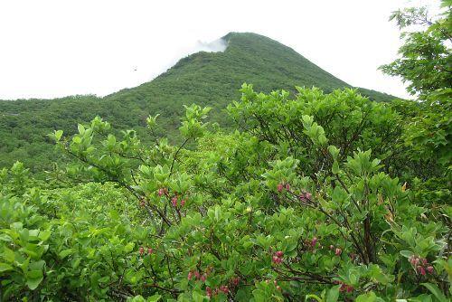 お花畑から見た磐梯山