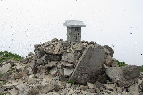 山頂と虫の大群