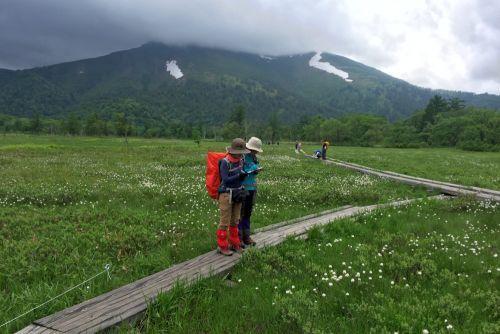 至仏山とワタスゲ群落