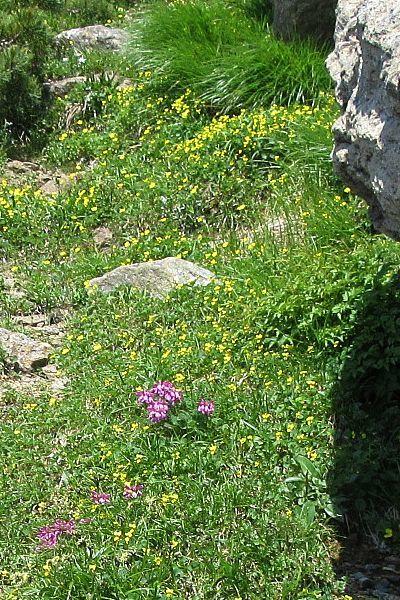 おびただしい数の花