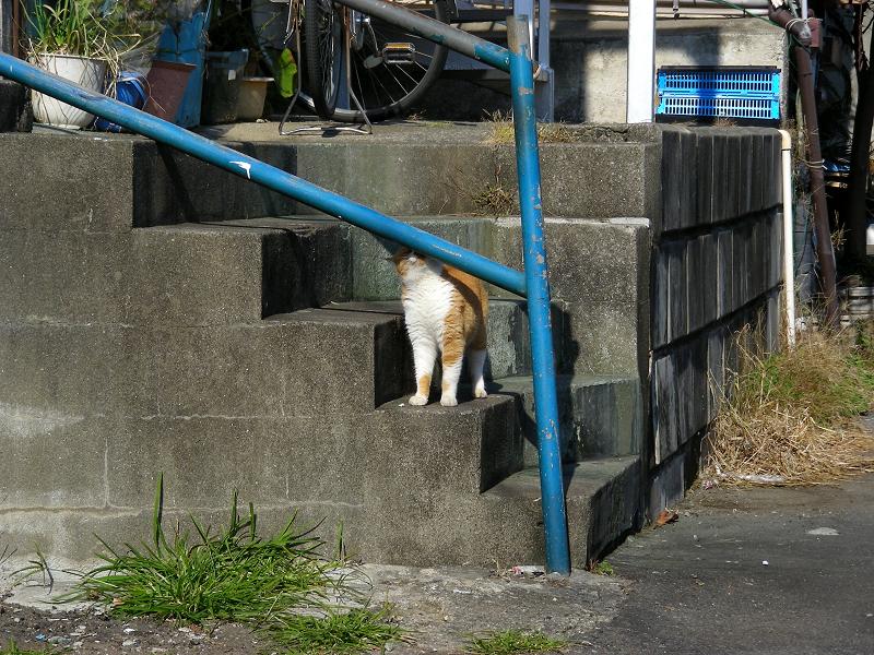 青空駐車場の茶白猫1