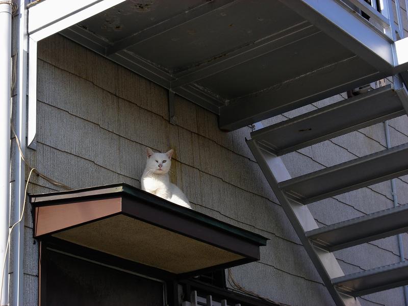 ベランダの下の白猫2