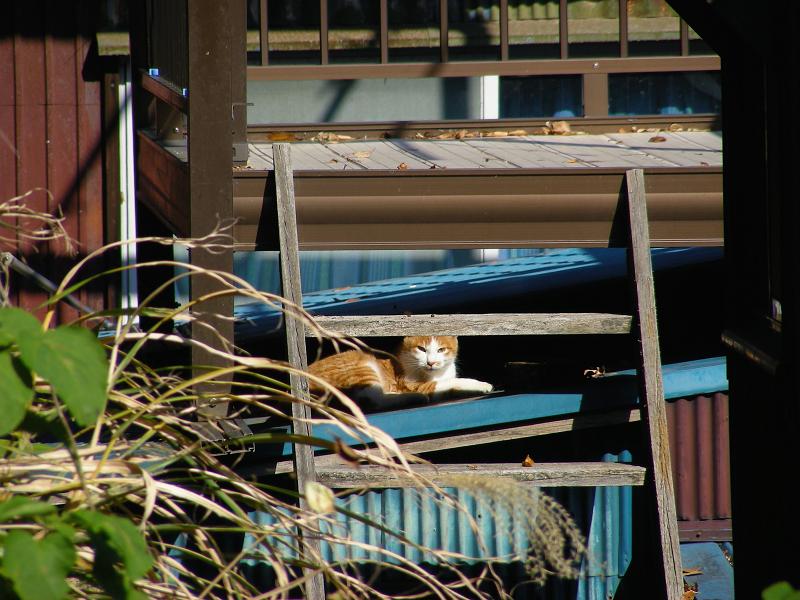 緑トタン屋根と茶白猫2